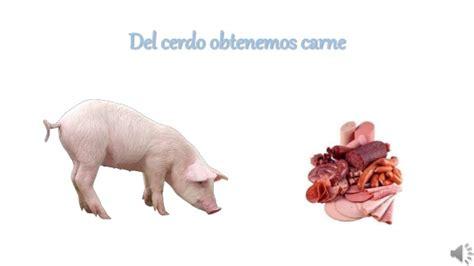 derivados de los animales derivados de la gallina derivados de los animales de la granja jennifer nogales