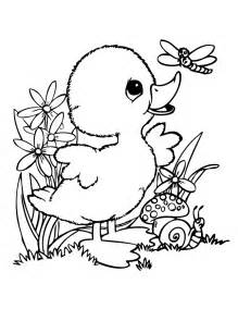 duck coloring pages duck drawings for coloring home