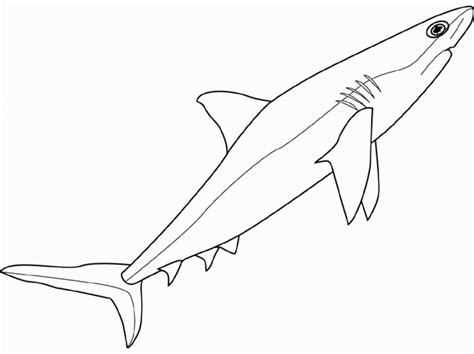 great white shark outline coloring home