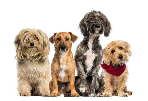 best puppy for me which is best for me do the quiz and find out pets guide