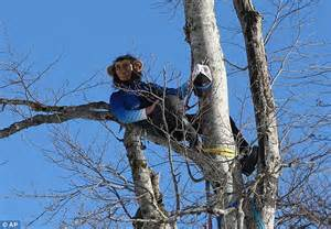 just monkeying around ski coaches hang from trees wearing just monkeying around ski coaches hang from trees wearing