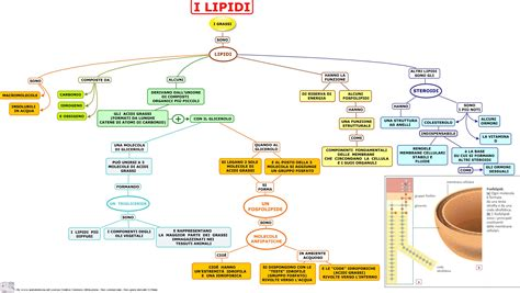 lipidi alimenti lipidi sonoci 242 chemangio