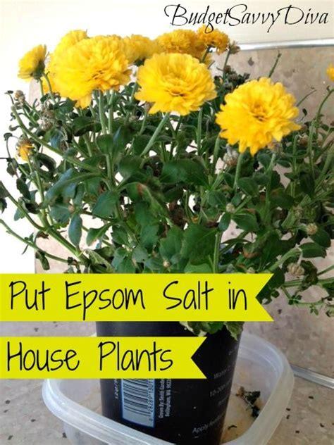 put epsom salt  house plants plants house plant care