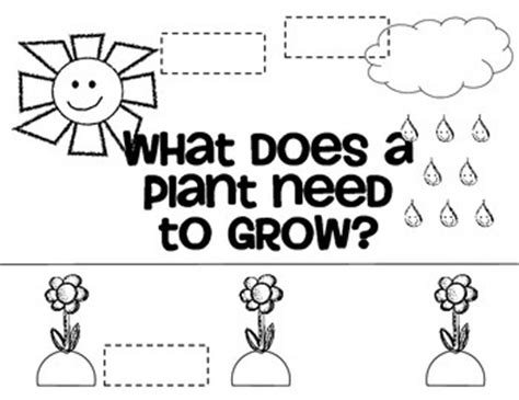 what do plants need to grow worksheet what do plants need to grow mini poster and worksheet by