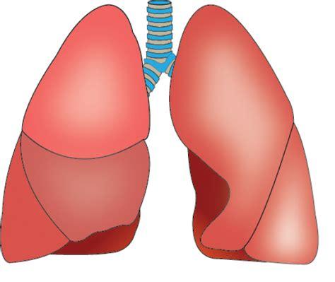 5 l 0 ob8 8 a 18 akciğer 25 ağustos 2015 g 246 rsel eğitim bilişim ağı