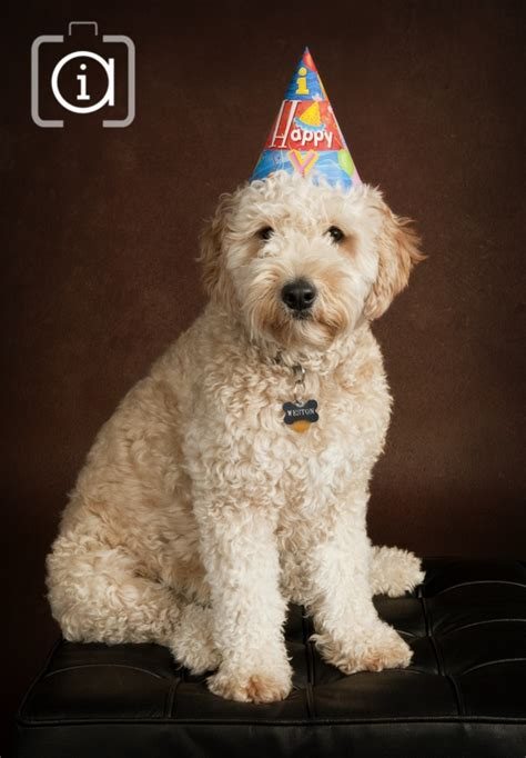 1000 Ideas About Goldendoodle On