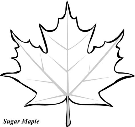 printable big leaves maple leaf pattern printable clipart best