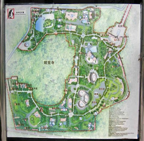 zoos chengdu zoo