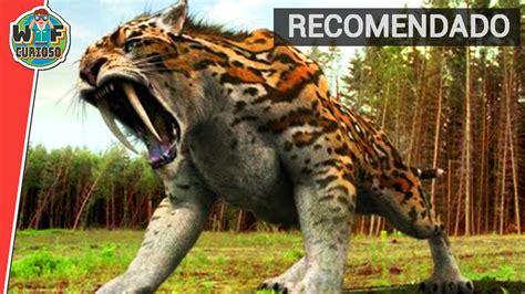 imagenes animales peligrosos top 4 animales salvajes mas peligrosos de la historia