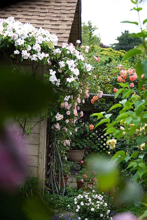 secret gardens rose notes