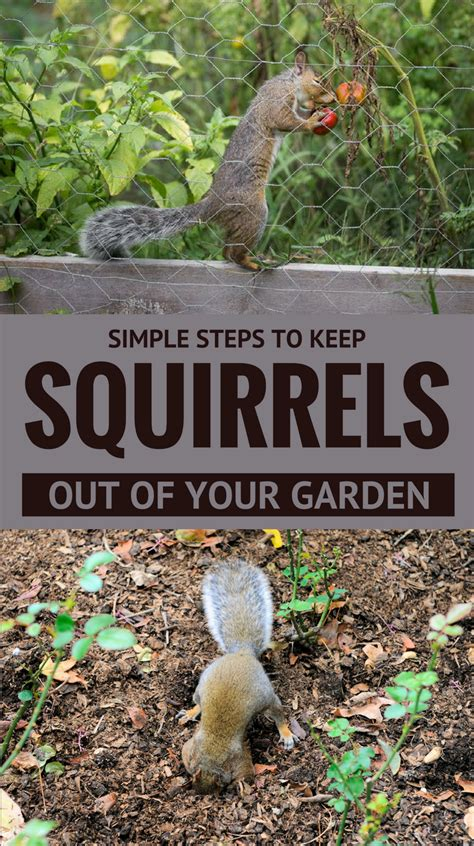simple steps to keep squirrels out of your garden