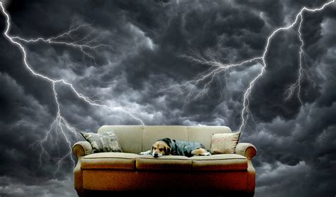 why are dogs afraid of thunder dogs afraid of storms how to calm a during thunderstorms