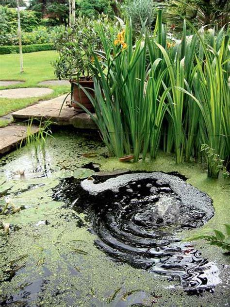 simple garden pond ideas simple garden pond ideas pond ideas glenns garden