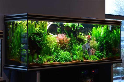 Aquascape Aquariums Verloop Aquariums Vijvers