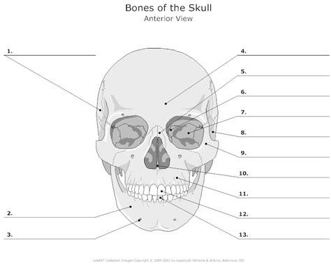 printable anatomy quiz anterior view of the skull bones unlabeled human anatomy
