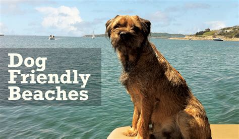 pet friendly places to stay dog cat and horse friendly stay guide things to do in cornwall places to visit on