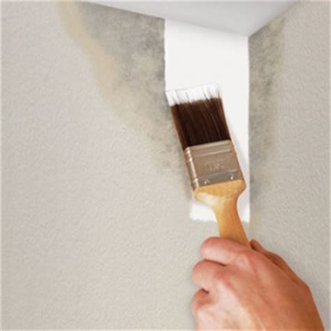 paint over mold in bathroom keep mould and mildew off your walls with mildew resistant