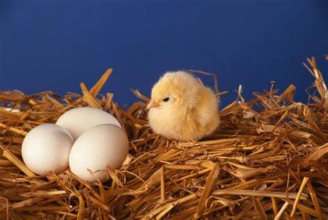 how do baby birds breathe inside their eggs mental floss