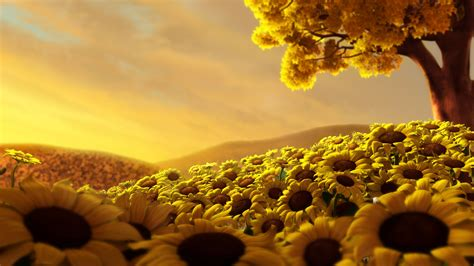 sunflower wallpaper  wallpaper hd desktop wallpapers