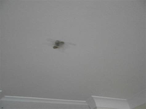 burn marks on the ceiling picture of norfolk hotel