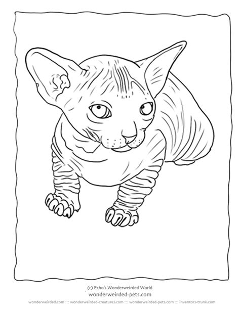 realistic cat coloring page realistic cat coloring pages az coloring pages