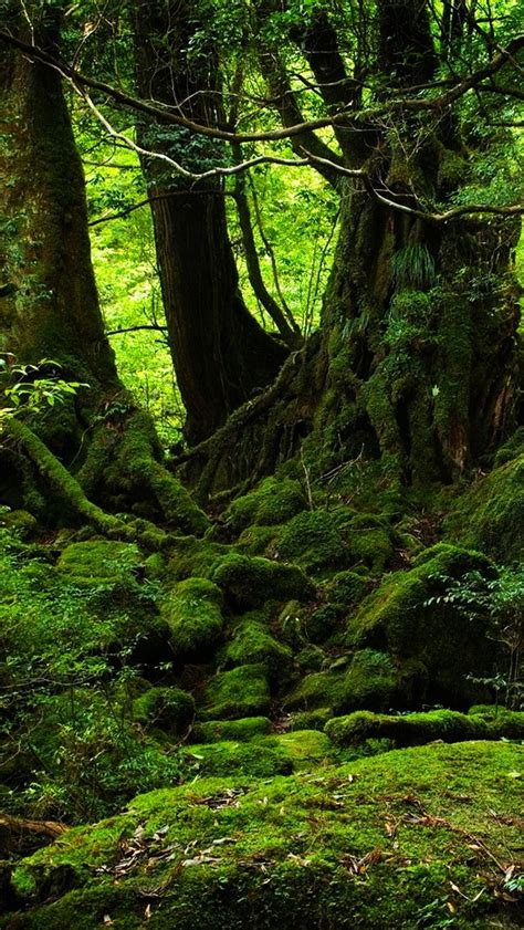 wallpaper iphone forest green forest wallpaper free iphone wallpapers