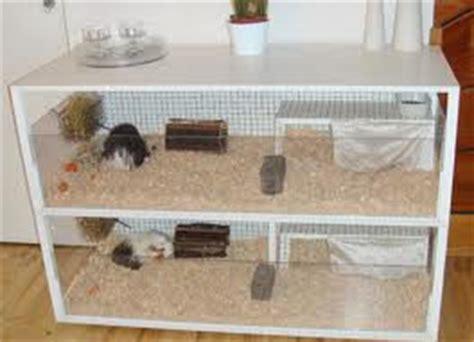 Kandang Kucing Gelap cara merawat landak mini yang baik is