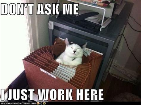 Working Cat Meme - funny animal images at work www pixshark com images
