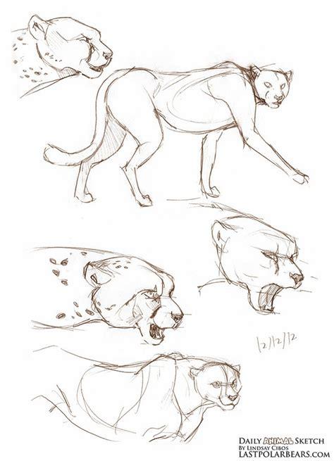sketchbook cheetah lindsay cibos daily animal sketch cheetahs
