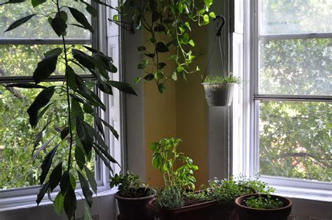 living room plant protect your plants from winter frost mh landscapes