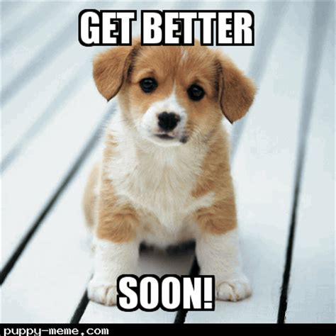 Get Better Soon Meme - puppy