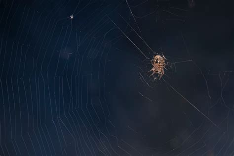 How To Keep Spiders Away From Your Bed by 5 Ways To Naturally Keep Spiders Away Pest