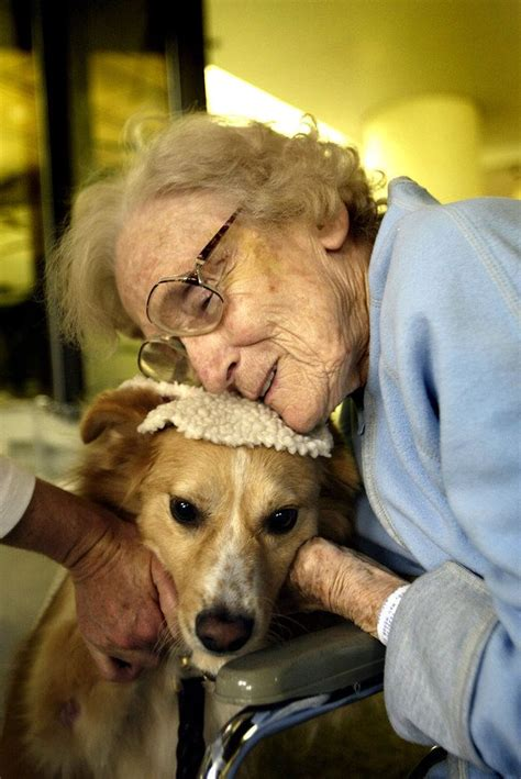 best therapy dogs 25 best ideas about therapy dogs on therapy service