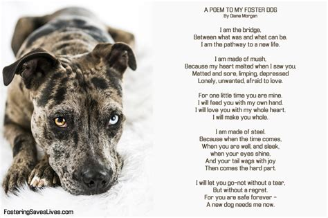 fostering dogs quotes by don foster like success