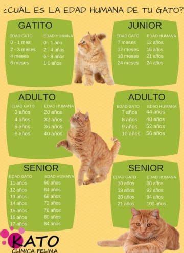 los amantes de todos b007fsxp02 12 infogr 225 ficos pr 225 cticos que todo amante de los gatos necesita interesante