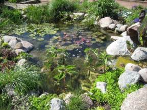 information on how to build a small pond in your garden