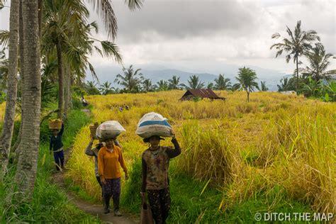 Mikuk Homestay Bali Indonesia Asia 5 days in seminyak and munduk bali indonesia