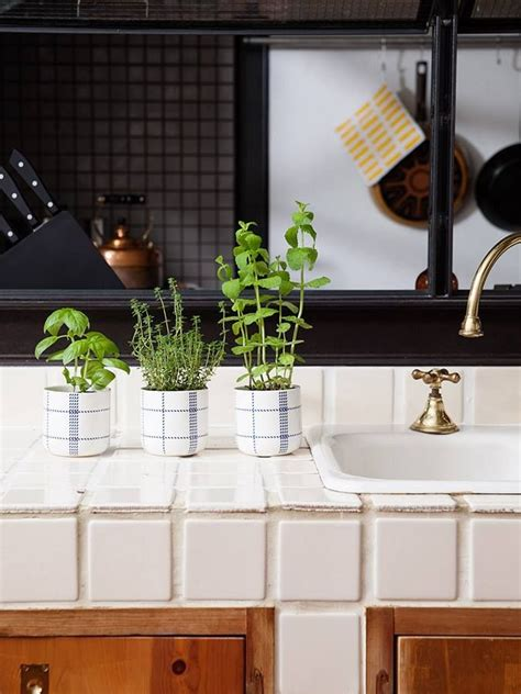kitchen herbs 101 best images about kitchen herb garden on pinterest