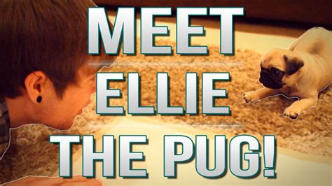 dantdm ellie the pug tdm vlogs meet ellie the pug episode 17 viyoutube