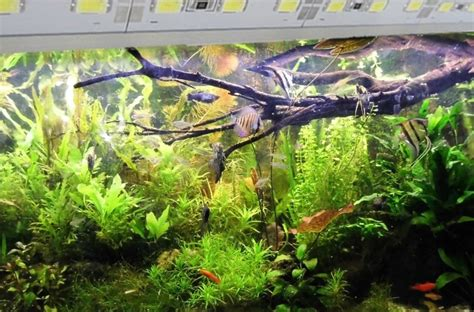 welche beleuchtung aquarium 4x 1m led leisten set f 252 r 120cm aquarien 10640lm smd5630