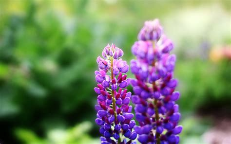 purple flowers hd 7309 2560 x 1600 wallpaperlayer com