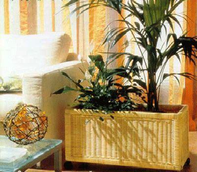plants home decor 9 jpg 123 best house plants images on pinterest succulents