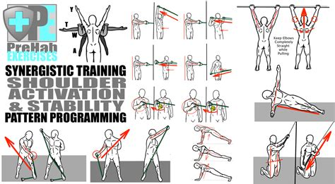 pattern is movement bandc synergistic training improve mobility stability and