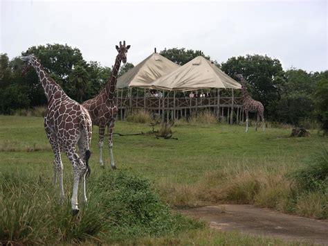wallpaper alam dan hewan kehidupan alam liar afrika dunia binatang