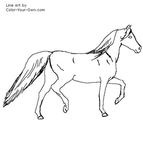 arabian horse coloring pictures