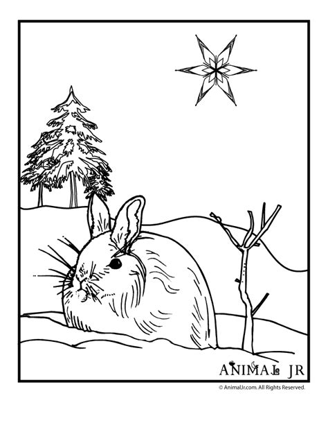 Winter Rabbit Coloring Page | winter bunny coloring page woo jr kids activities