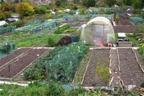 Kitchen Table Top allotment availability brighton amp hove city council