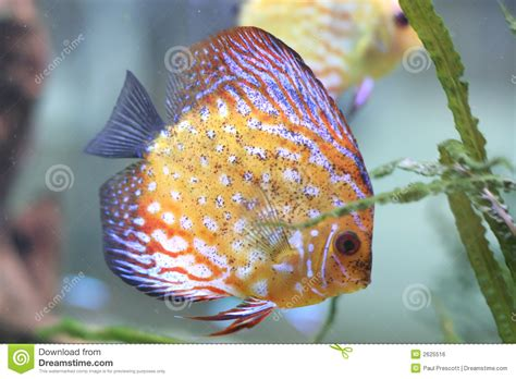 what color are fish color fish in aquarium stock photo image of fish