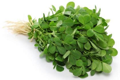 Minyak Usar fenogreco o alholva propiedades y usos medicinales ecoagricultor