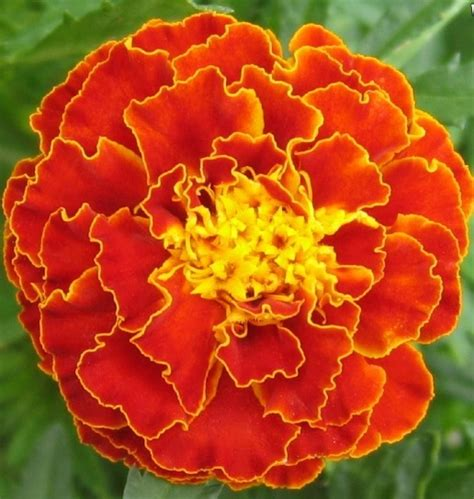 themes of the story marigolds 2nd trimester h english 9a
